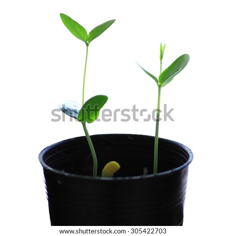 seed growth isolated