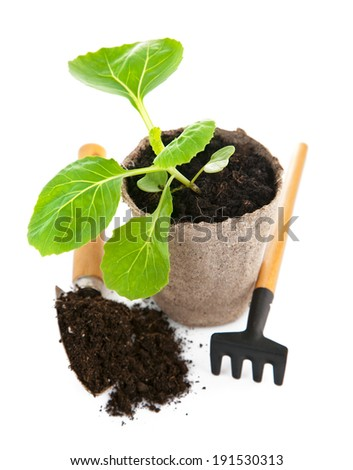 Seedlings cabbage in pot with garden tools. Isolated on white background
