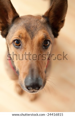 Selective focus head shot from above of dog