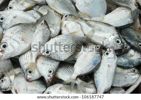 Selling of fresh fish on the market