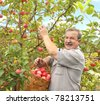 Senior farmer, harvesting a apple - stock photo