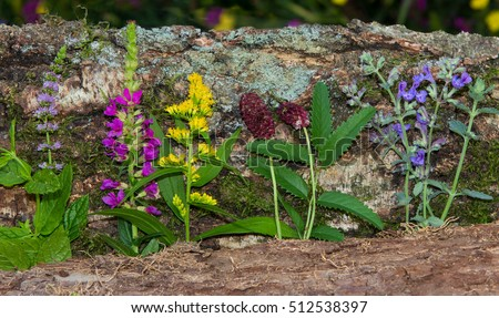 Series of healing herbs or kitchen spice in front of a natural wooden background.