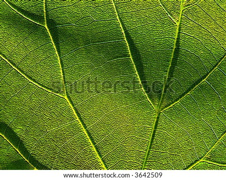 Series of the textures (green leaf 4)