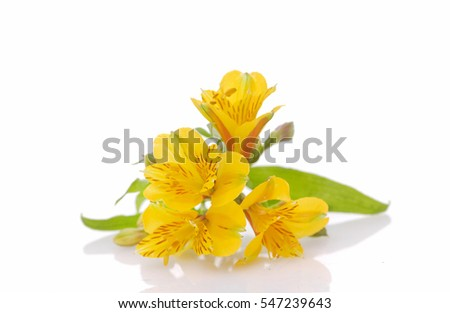 Set of beautiful yellow orchid flowers isolated on white background
