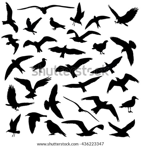 Set of birds silhouettes 30 in 1 on white background