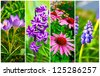 set of cone flower, crocus, Hyacinth and Bluebells flower - stock photo