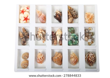 Set of different shells in a box isolated on white background