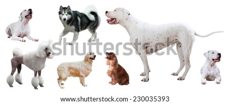 Set of Dogo Argentino and other dogs. Isolated over white