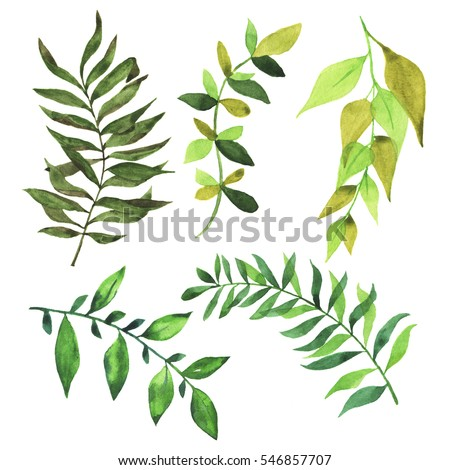Set of green branches and leaves on white background. Hand drawn watercolor illustration.