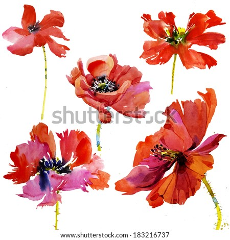 Set of 5 hand painted watercolor poppy flowers
