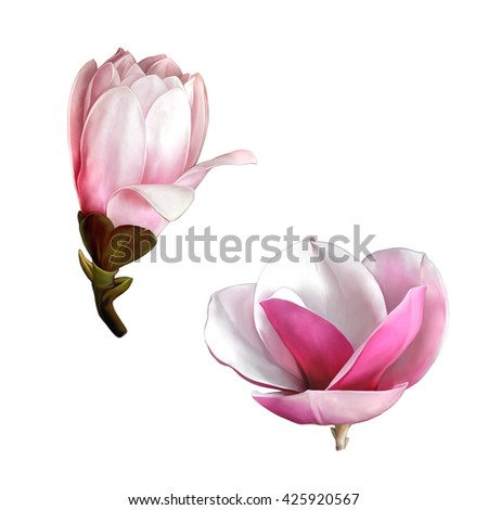 set of Illustrations of beautiful magnolia flowers, Spring flower isolated on white background