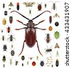 Set of insects isolated on a white background. Long horn beetle  and various other insects. Small versus big size (parameter) of insects concept  - stock photo