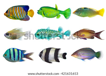 Set of sea -nr.2- reef fish on white background