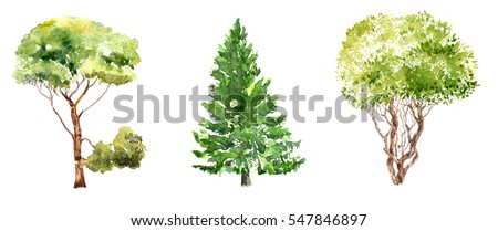 set of trees drawing by watercolor, fir, pine and bush, isolated natural elements, hand drawn illustration
