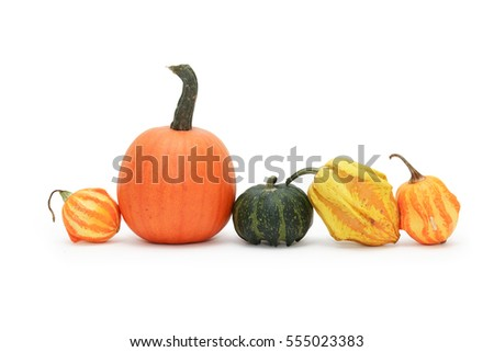 Set of various pumpkin fruits on white background. Isolated with clipping path