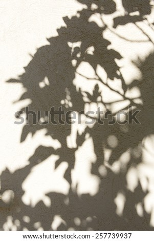 shadow of a fig tree on a wall