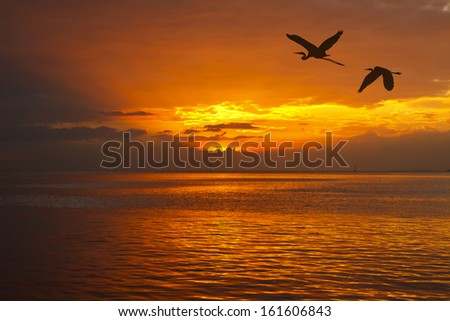 Shadow of an Birds flying to the sun by red sunset over the ocean