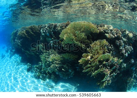 Shallow coral reef underwater in the red sea