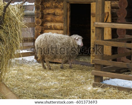Sheep Laying Down Beside Barn Door Stock Photo 4800691 ...