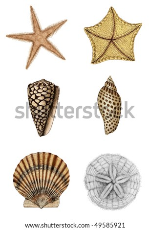 Shell Assortment 2