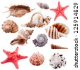 Shell collection, isolated - stock photo
