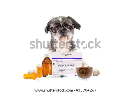 Shitsu Dog Tongue Wearing Eyeglasses Prescription Drugs Dog Food Bowl isolated on white background