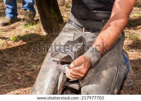 shoeing hooves riding domestic horses for recreation and sport