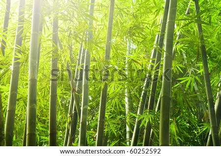 shot of bamboo forest with ray of lights