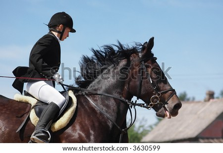 show jumper horse and show jumper
