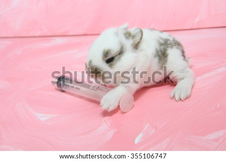sick baby rabbit with syringe as for cure illness or on testing
