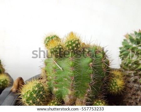 Side view cactus on white background