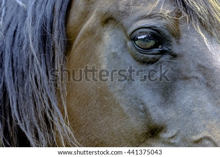 Side view of a horse's face with close up of the eye