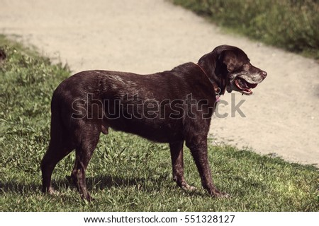 Side view of black dog playing outside on grass and copyspace.