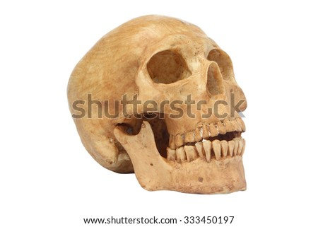 Side view of human skull model isolated include path