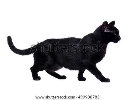 Side view portrait of a walking  black cat