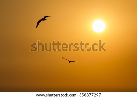 Silhouette Flying Seagull under the sun