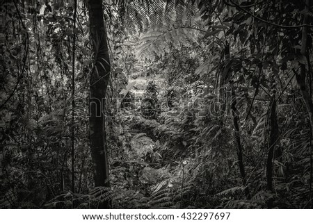 Silhouette Monochrome, B&W, shadow decorative plants Natural forest species in the jungle big, garden as a god environment on white background in toned color and selective focus