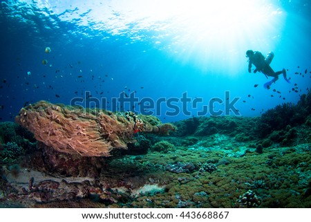 Silhouette of a diver above the healthy shallow reef. Nusa Penida, Indonesia.