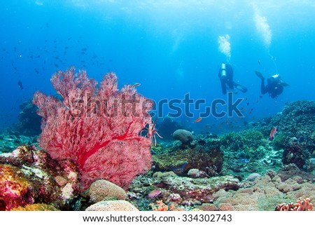 SIlhouette of a diver swimming in tropical water. Underwater view with the amazing red coral in Indonesia, Nusa Penida.