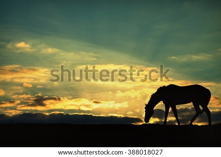 silhouette of a horse grazing in the sunset sky background