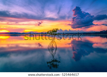 Silhouette of Mangrove in sea at sunset background.