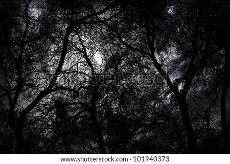 Silhouette of mystery forest against dramatic sky at night