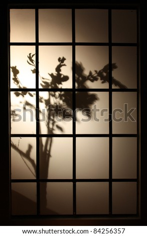 Silhouette of plant behind window blinds