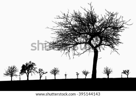 Silhouette of tree, bush with bare branches. Winter scenery trees from a far landscape and black space for text illustration