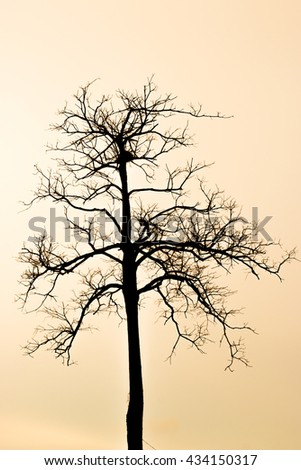 silhouette with Leafless tree on amber sky