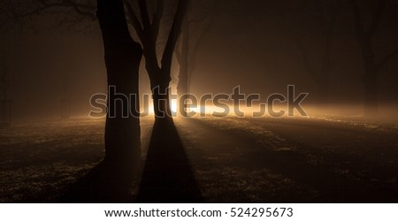 Silhouettes of trees in a foggy forest