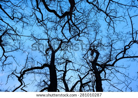 Silhouettes tree branches with sky. Sunset in forest. Background for design