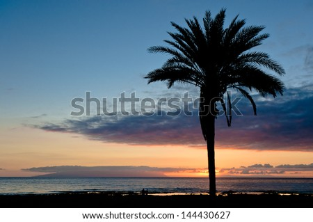 Single palm tree at sunset silhouette with cloudscape on background