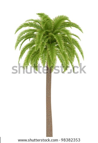 single palm tree isolated on white