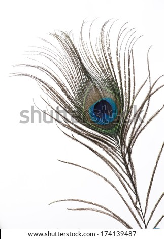 Single Peacock Feather Black And White